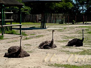 東武動物公園13
