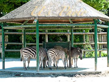 東武動物公園20