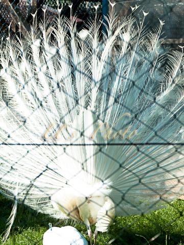 東武動物公園12