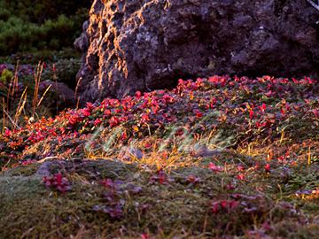 トムラウシ登山 61