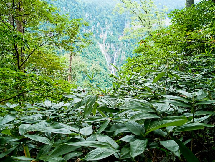 トムラウシ登山 84