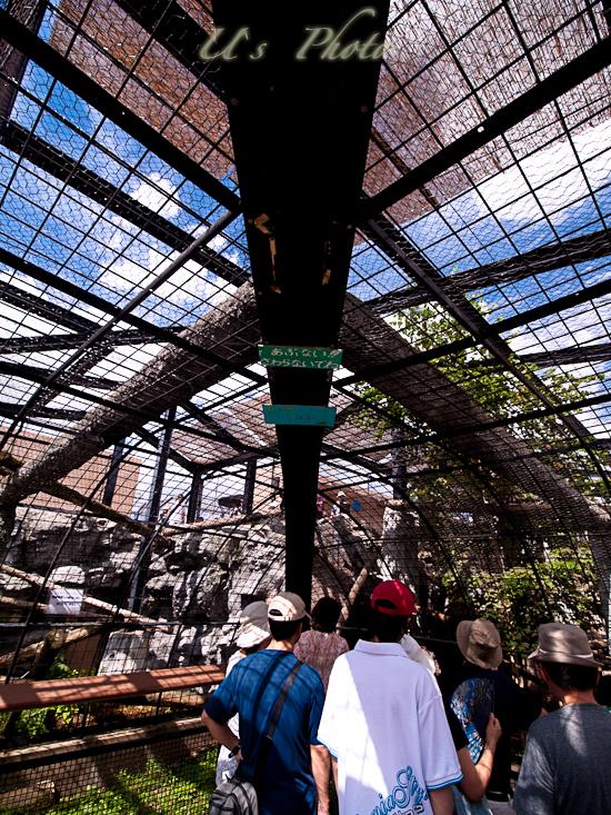 旭山動物園 4