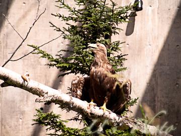 旭山動物園 5