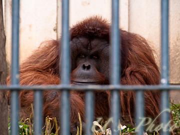 旭山動物園 8
