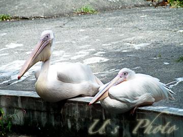 旭山動物園 7