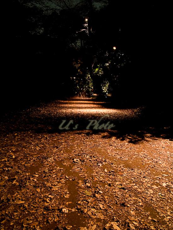 六義園ライトアップ 11
