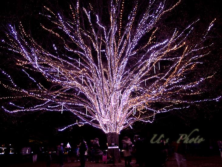 昭和記念公園のイルミネーション 3