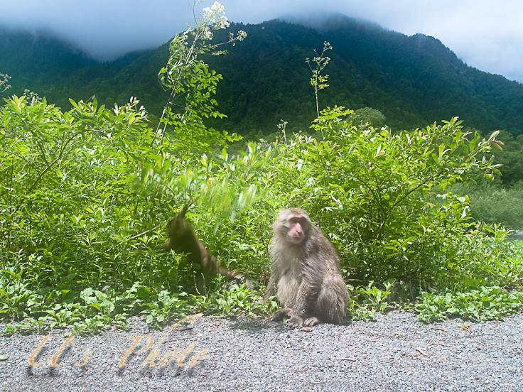 梓川添いで出会った猿の親子